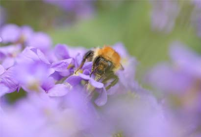 A Campaign For Bumblebee Workers' Rights